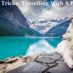 Tips + Tricks: Travelling With A Pet