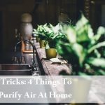 Tips + Tricks: 4 Things To Help Purify Air At Home