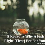 5 Reasons Why A Fish Is The Right {First} Pet For Your Kids