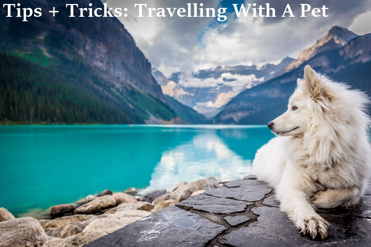 tips and tricks, travel, pets