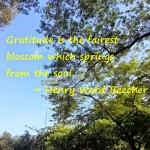 Thankful Thursday: Enjoying Summer