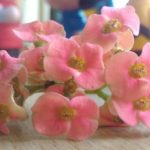 Pink Fridays: Pretty Lil' Pink Flowers