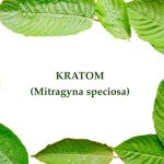 Alternative Medicine: What Strain of Kratom Is The Strongest?