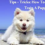Tips + Tricks: How To House Train A Puppy Fast