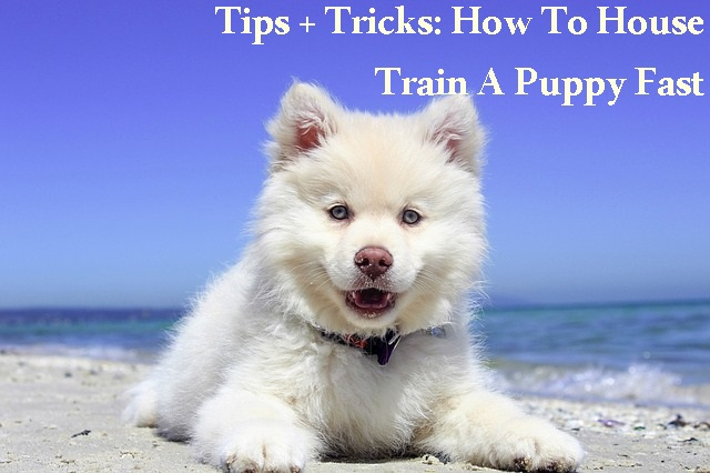 home, home and garden, tips and tricks, pets, homemaking
