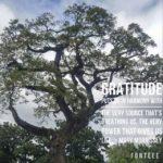 Thankful Thursday: Of Gratitude + Life
