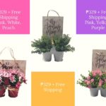 Mother's Day Gift Ideas: Say It With Flowers